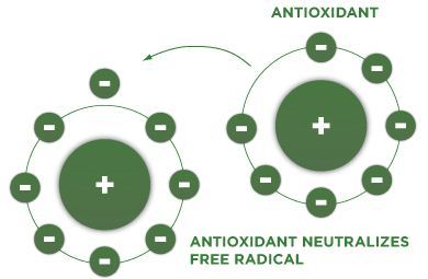 antioksidan - sansevieria tanaman lidah mertua